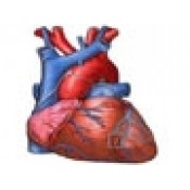 Inima, Circulatie, Hipertensiune arteriala